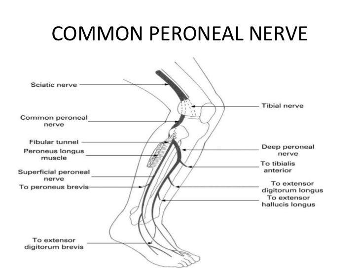 Neurontin Nerve Repair