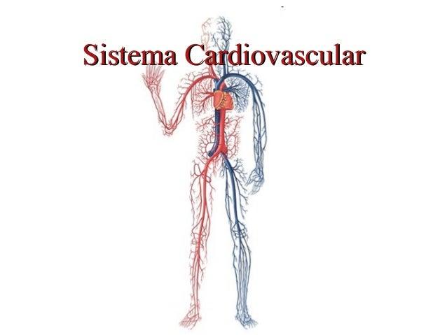 Sistema CardiovascularSistema Cardiovascular