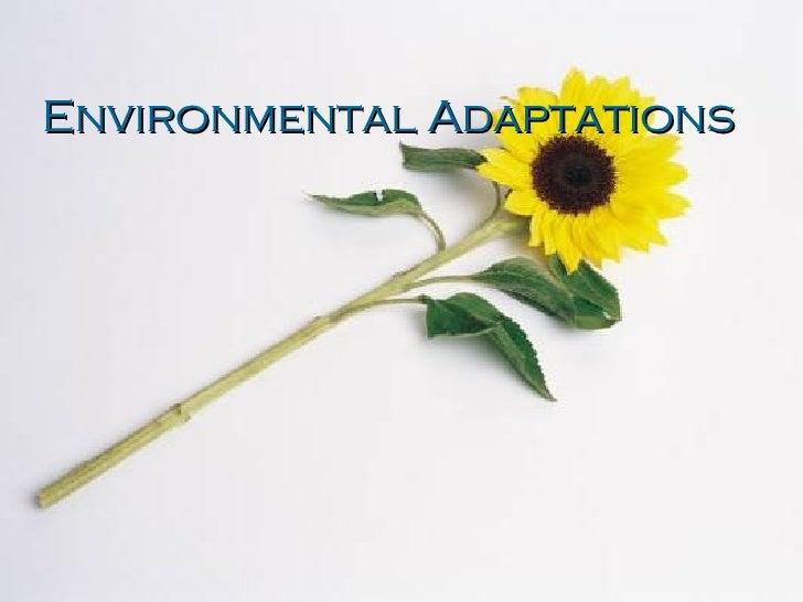 Environmental Adaptations
