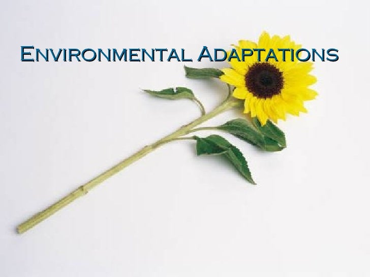 Environmental Adaptation