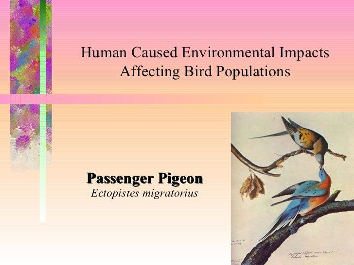 Environmental hazards for birds