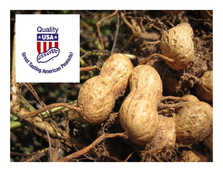 US peanuts are planted after the last frost in April or May when            soil temperatures reach 65‐70°F (20°C).     Pr...
