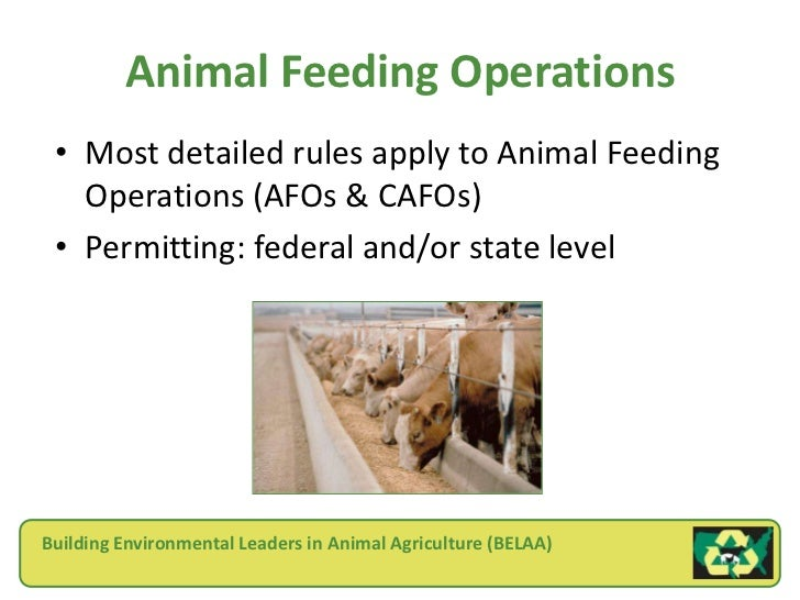 what should be done about the concentrated animal feeding operations situation Cafo (concentrated animal feeding operation) concentrated animal feeding operations—cafo's: dan imhoff speaks out - duration: 10:23.