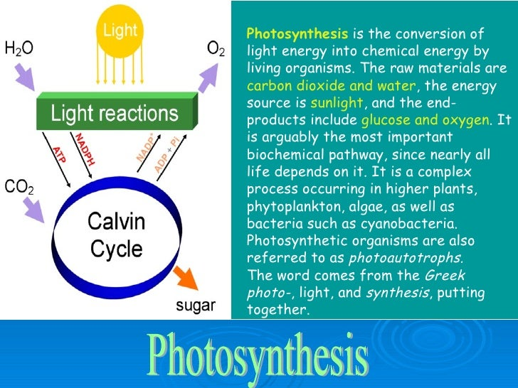 the end products of photosynthesis include