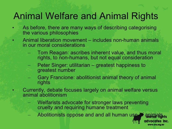 Animal Welfare Essay