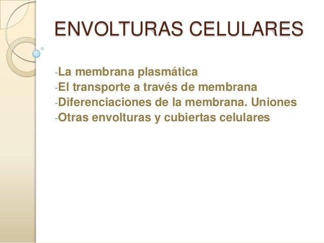 ENVOLTURAS CELULARES -La  membrana plasmática -El transporte a través de membrana -Diferenciaciones de la membrana. Unione...