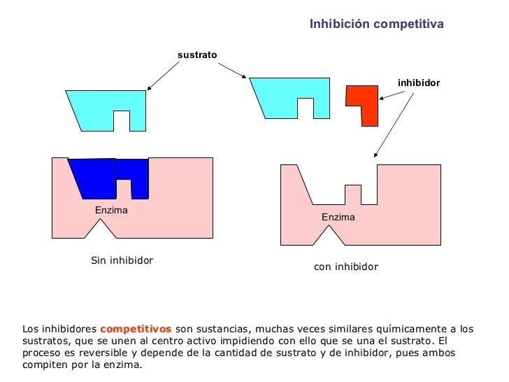 Los inhibidores  competitivos  son sustancias, muchas veces similares químicamente a los sustratos, que se unen al centro ...