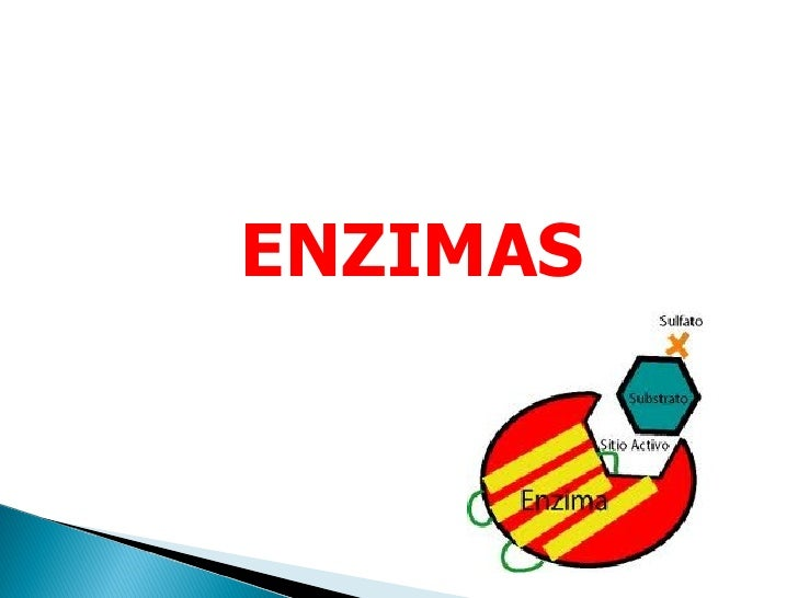 Biologia - Proteínas ( Enzimas)