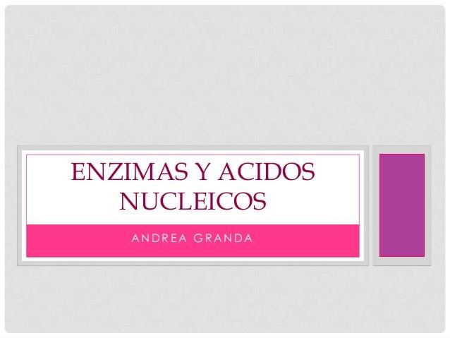 ENZIMAS Y ACIDOS NUCLEICOS ANDREA GRANDA