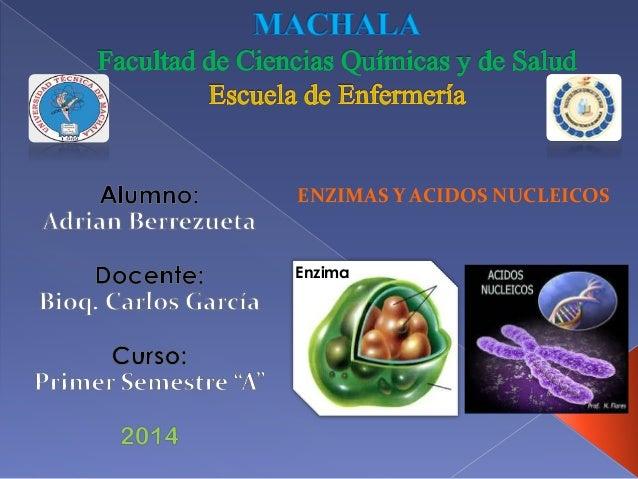ENZIMAS Y ACIDOS NUCLEICOS  Enzima