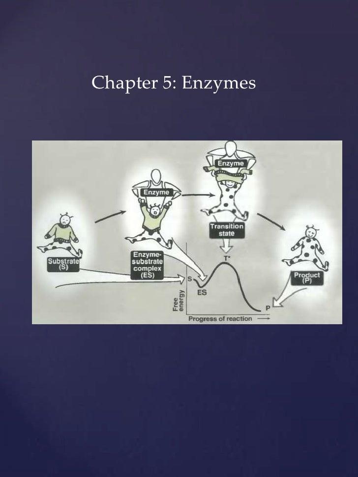 Chapter 5: Enzymes<br />