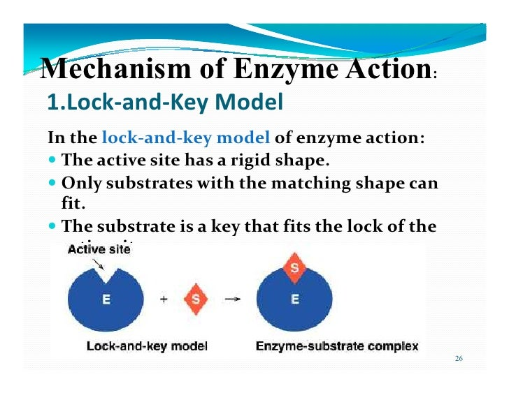 mechanism of enzyme action pdf
