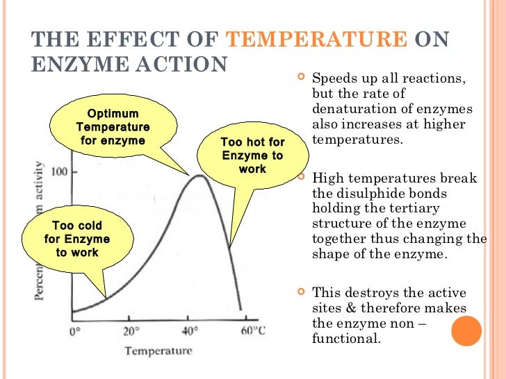 understanding the effect of temperature on the enzyme amylase activity Science & evolution blog home paper return to content effect of temperature and ph on enzyme rise in the temperature, the activity of enzyme doubles until.