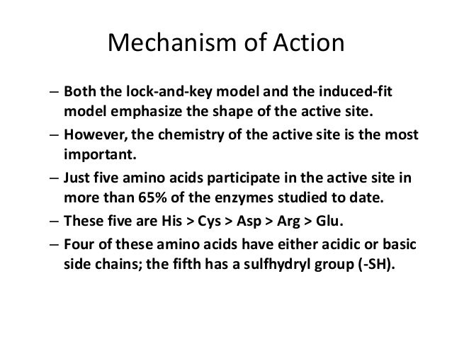Mechanism of action both the lock and key model and