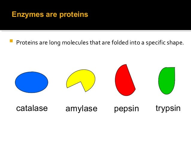 What happens when trypsin is added to the enzyme found in milk?