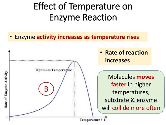effect of temperature on enzyme catalyzed reaction When they are just the right temperature, then they are just the right shape and  the chemical reactions that they catalyze take place at the optimal rate and with.