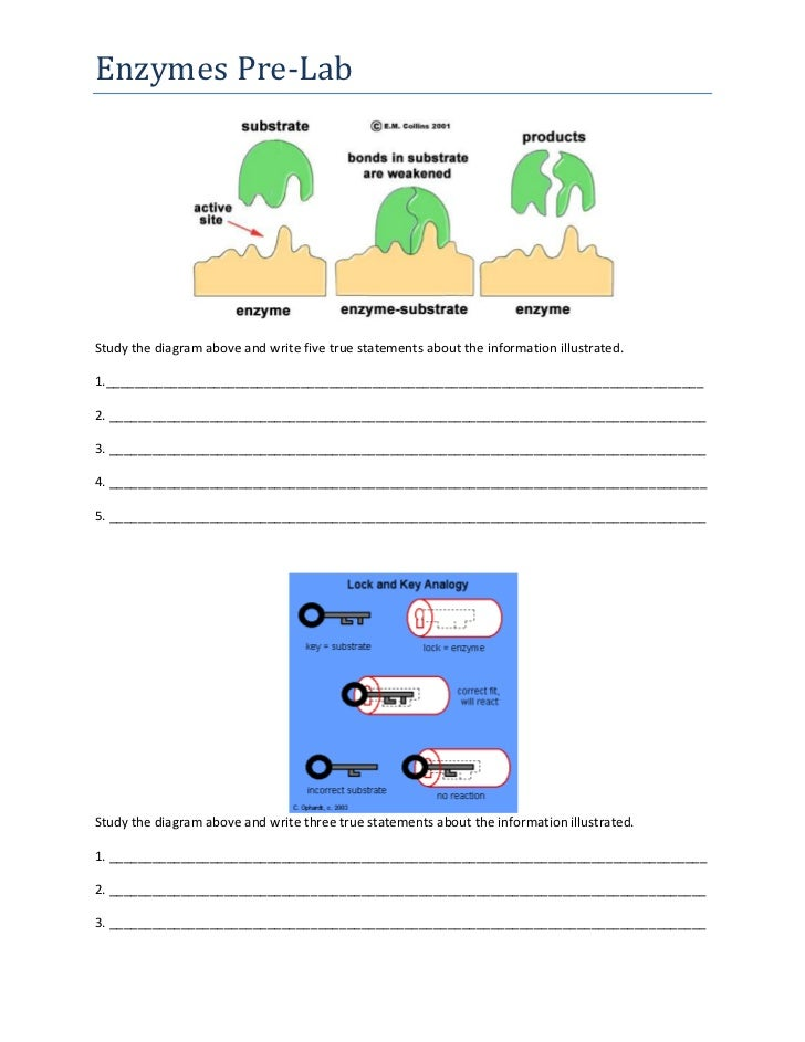 Study the diagram above and write five true statements about the information illustrated.<br />1._________________________...