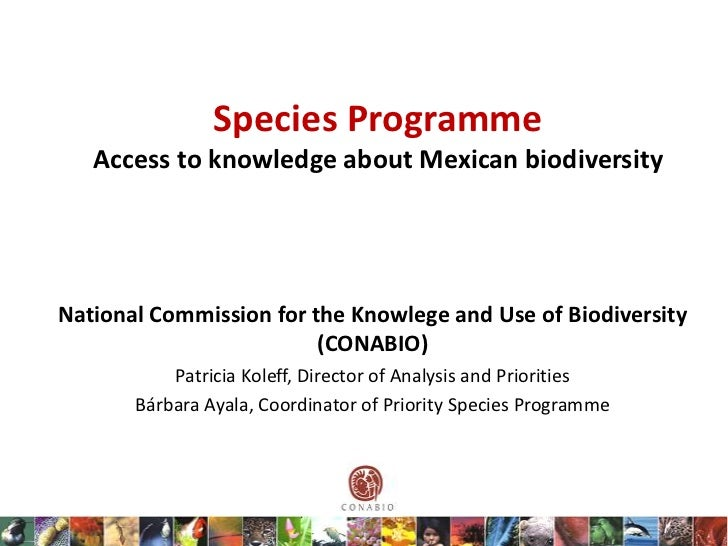 Species Programme   Access to knowledge about Mexican biodiversityNational Commission for the Knowlege and Use of Biodiver...