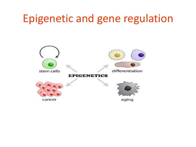 Gene Expression in Mammalian Cells and its Applications
