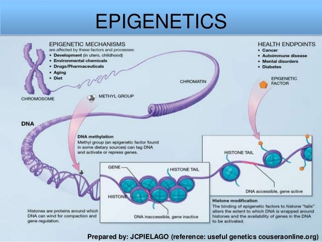 EPIGENETICS  Prepared by: JCPIELAGO (reference: useful genetics couseraonline.org)