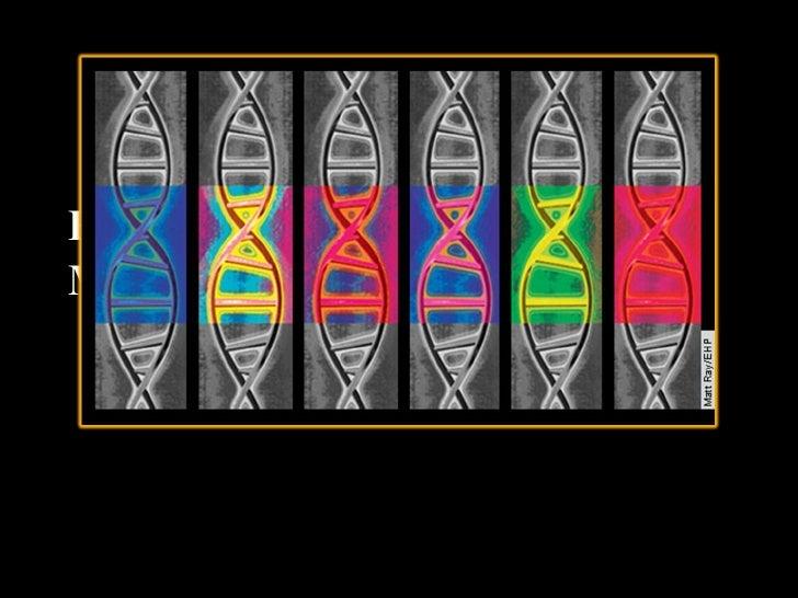 Epigenetics & DNA Methylation By: Kaitlyn Fonzi & Briana Barkdull