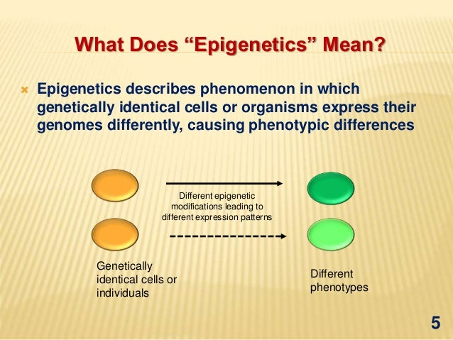"What Do You Mean, ""Epigenetic""?"