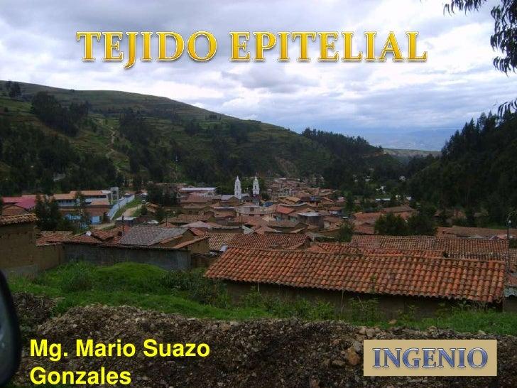 TEJIDO EPITELIAL<br />Mg. Mario Suazo Gonzales<br />INGENIO<br />