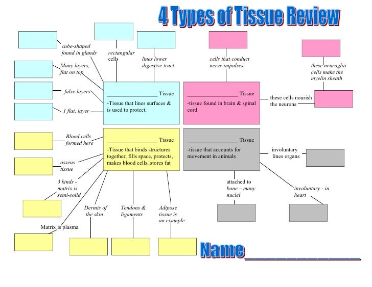 4 Types of Tissue Concept Map