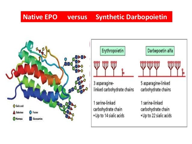 Erythropoetin from bench to bedside