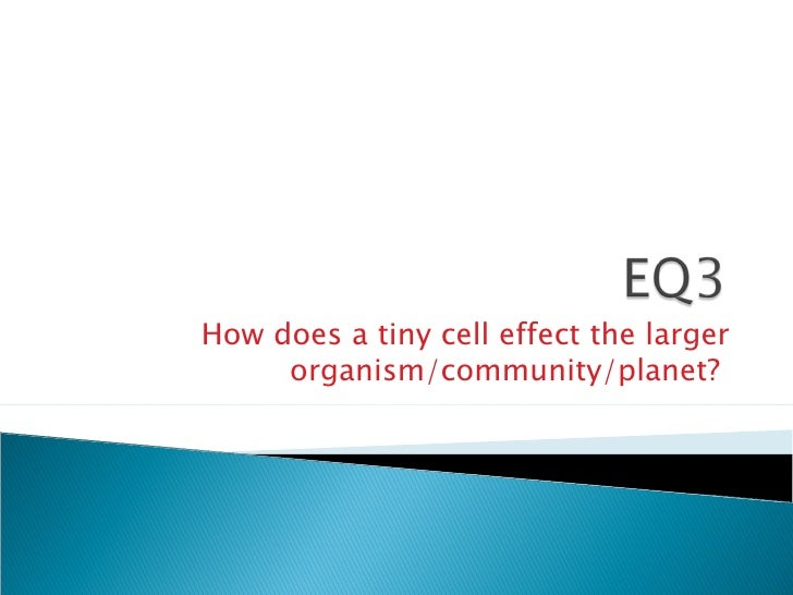 How does a tiny cell effect the larger organism/community/planet?