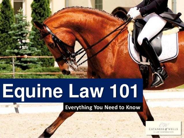 Equine Law 101 Everything You Need to Know