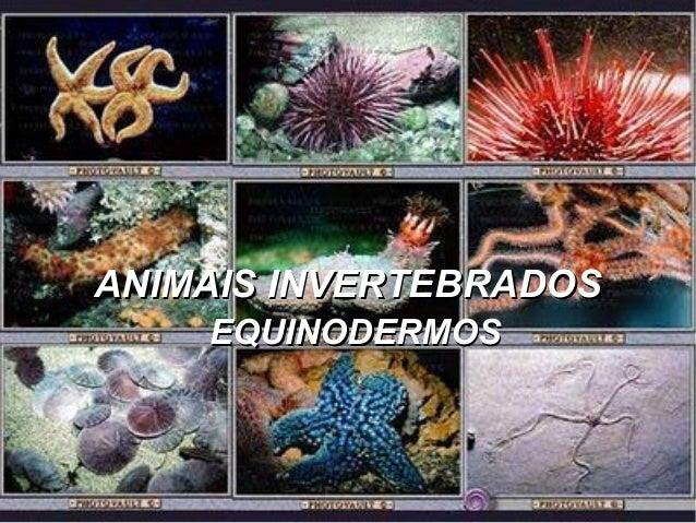 ANIMAIS INVERTEBRADOSANIMAIS INVERTEBRADOS EQUINODERMOSEQUINODERMOS