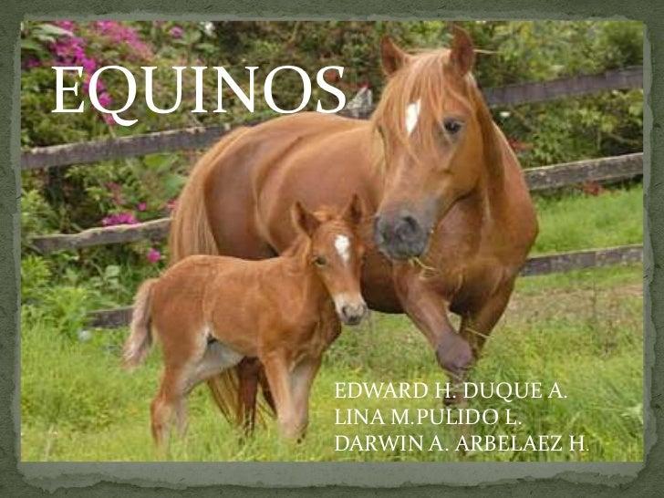 EQUINOS<br />EDWARD H. DUQUE A.<br />LINA M.PULIDO L.<br />DARWIN A. ARBELAEZ H.<br />