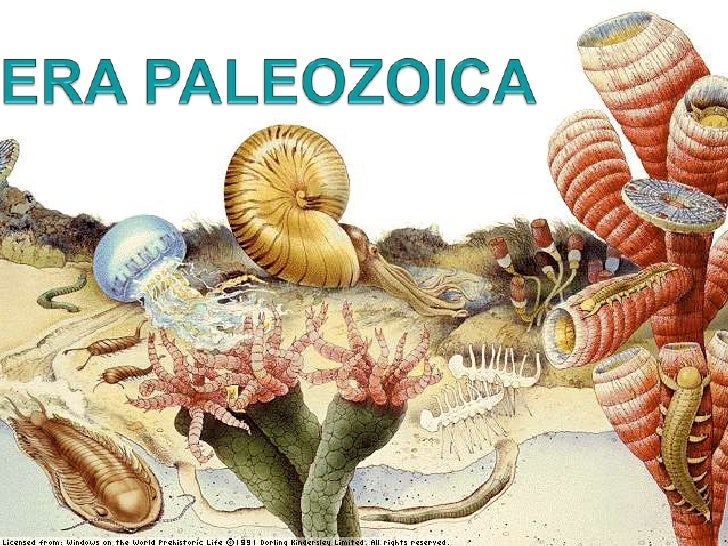 ERA PALEOZOICA<br />