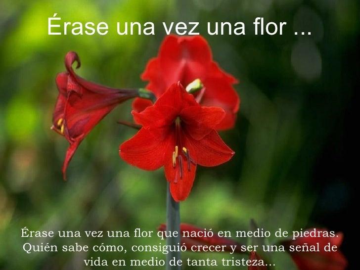 Érase una vez una flor ...     Érase una vez una flor que nació en medio de piedras. Quién sabe cómo, consiguió crecer y s...
