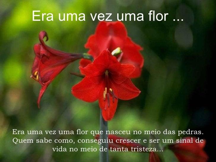 Era uma vez uma flor ... Era uma vez uma flor que nasceu no meio das pedras. Quem sabe como, conseguiu crescer e ser um si...