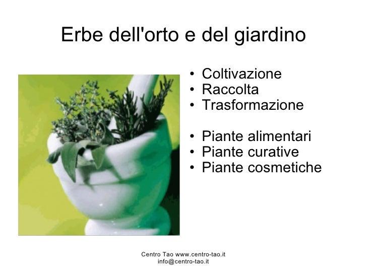 Erbe dell'orto e del giardino <ul><ul><li>Coltivazione  </li></ul></ul><ul><ul><li>Raccolta  </li></ul></ul><ul><ul><li>Tr...