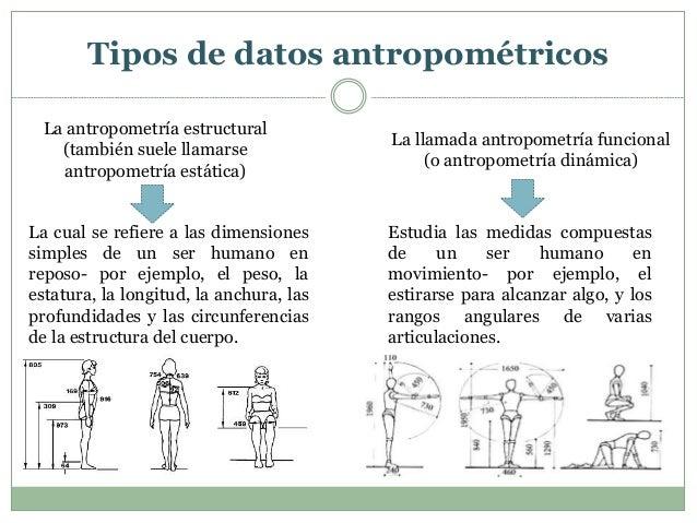 Ergonomia unidad 4 gesti n empresarial for Antropometria estatica