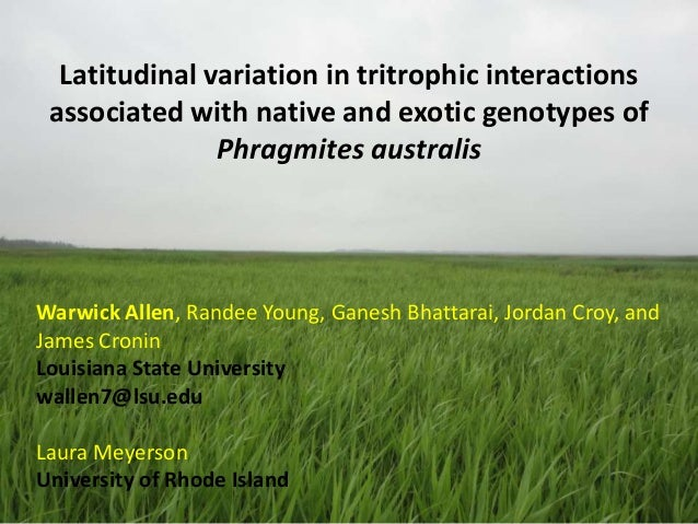 Latitudinal variation in tritrophic interactions associated with native and exotic genotypes of Phragmites australis  Warw...