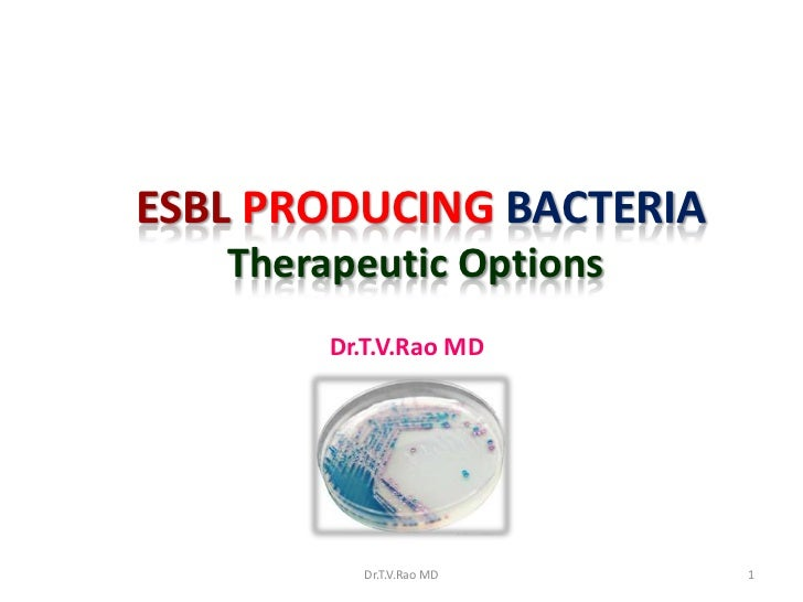 ESBL Producers Therapeutic options