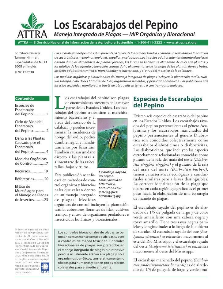 Los Escarabajos del Pepino  ATTRA                             Manejo Integrado de Plagas — MIP Orgánico y Bioracional   AT...