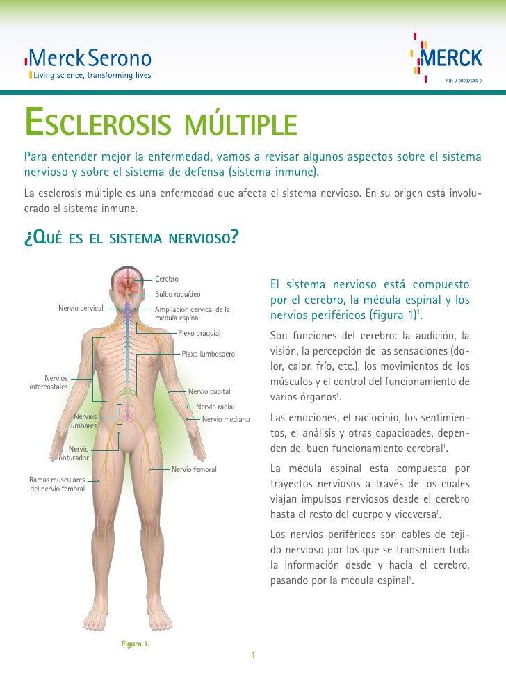 Esclerosis múltiplePara entender mejor la enfermedad, vamos a revisar algunos aspectos sobre el sistemanervioso y sobre el...