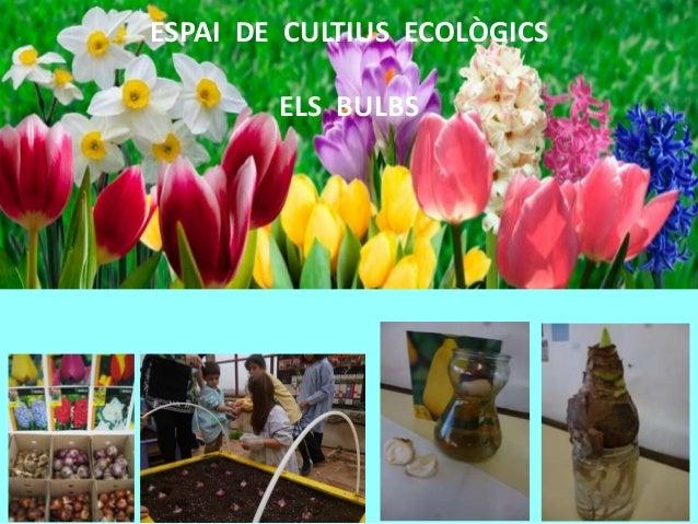 ESPAI DE CULTIUS ECOLÒGICS ELS BULBS