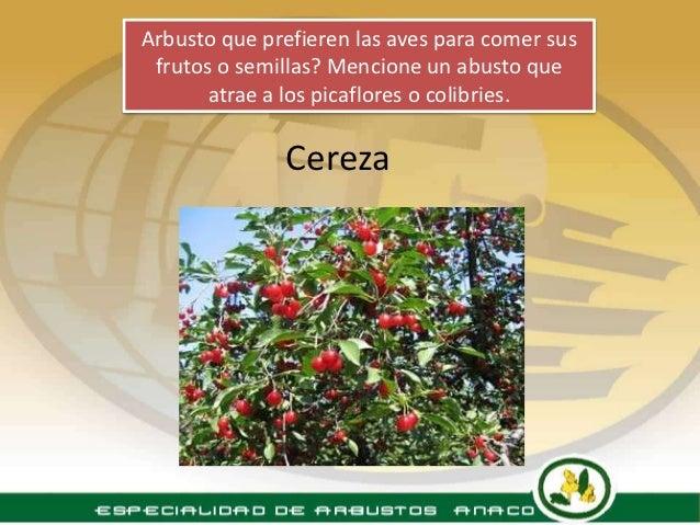 Especialidad arbustos - Nombres de arbustos ...