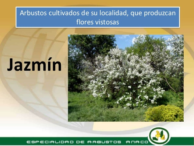 Especialidad arbustos for Arbustos de jardin nombres