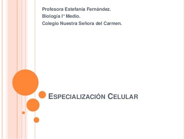 ESPECIALIZACIÓN CELULAR Profesora Estefanía Fernández. Biología I° Medio. Colegio Nuestra Señora del Carmen.