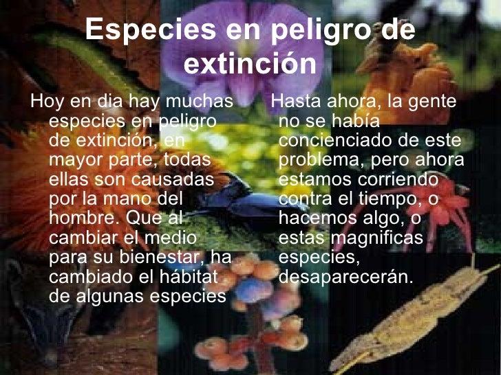 Especies en peligro de extinción <ul><li>Hoy en dia hay muchas especies en peligro de extinción, en mayor parte, todas ell...