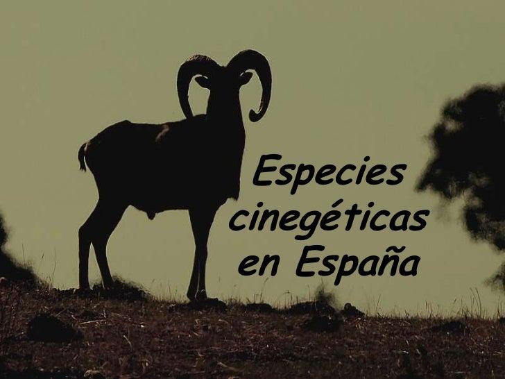 Especies cinegéticas <br />en España<br />
