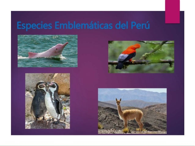 Especies Emblemáticas del Perú
