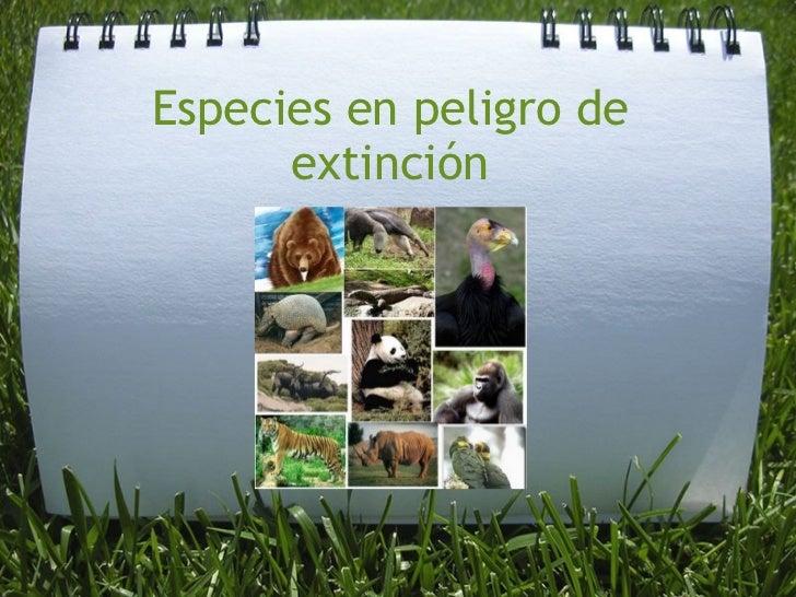 Especies en peligro_de_extincion-1